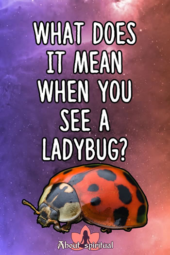 What Does It Mean When You See A Ladybug